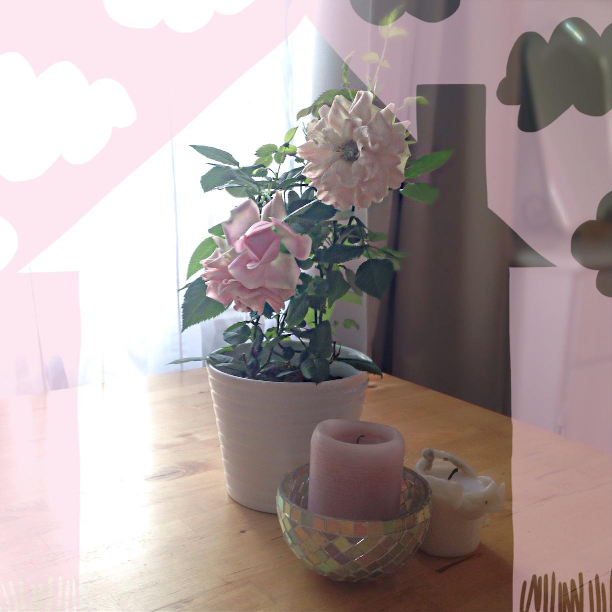 ernstlichdein.de Rose zu Hause